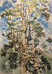 Millenarian Alerce tree, Chili, 45 x 65, E 450