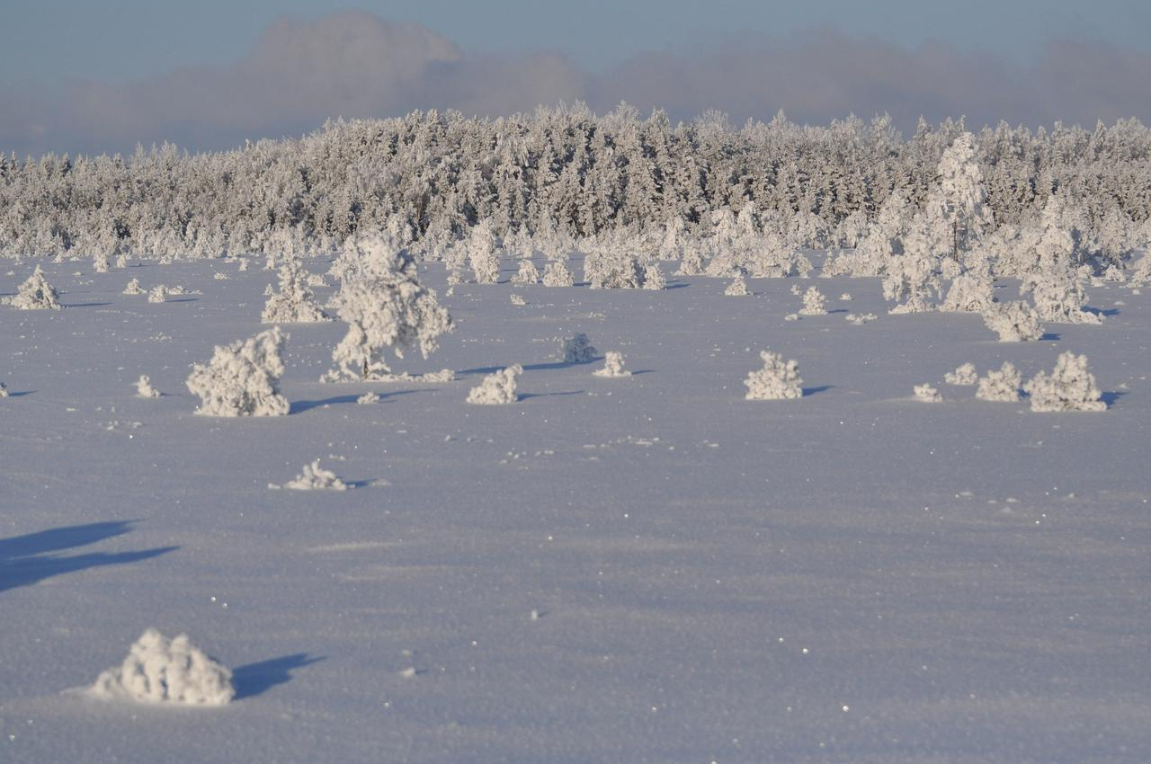 Winter in Kuresoo bog on the way to abandoned Toonoja village. Photo: Rait Parts