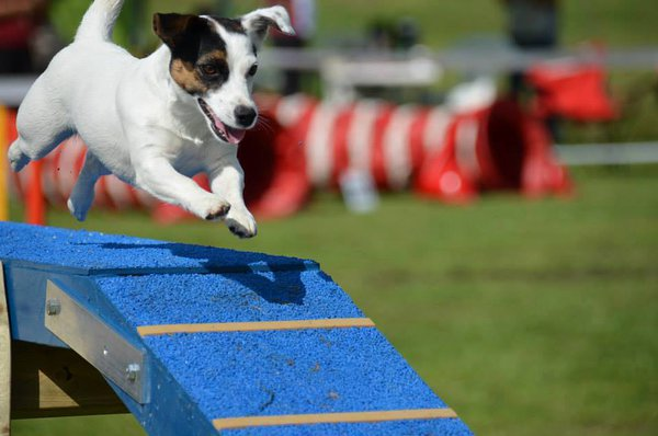 Agility competition in Riga 16.-17.08.14