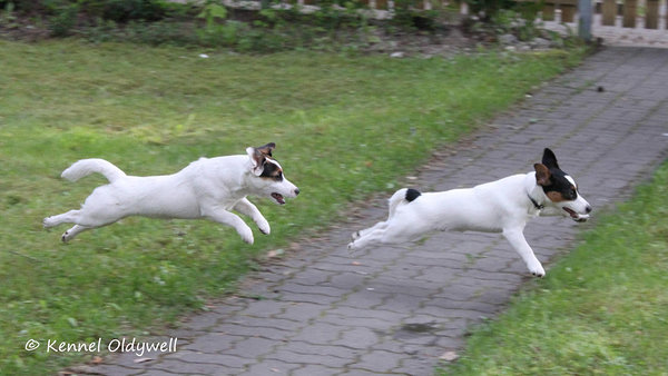 Flying puppies :) Dede and Artie