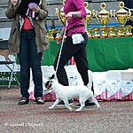JRT speciality show 31.05.15, baby class