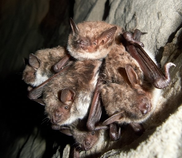 ELF is starting to improve bats' wintering conditions