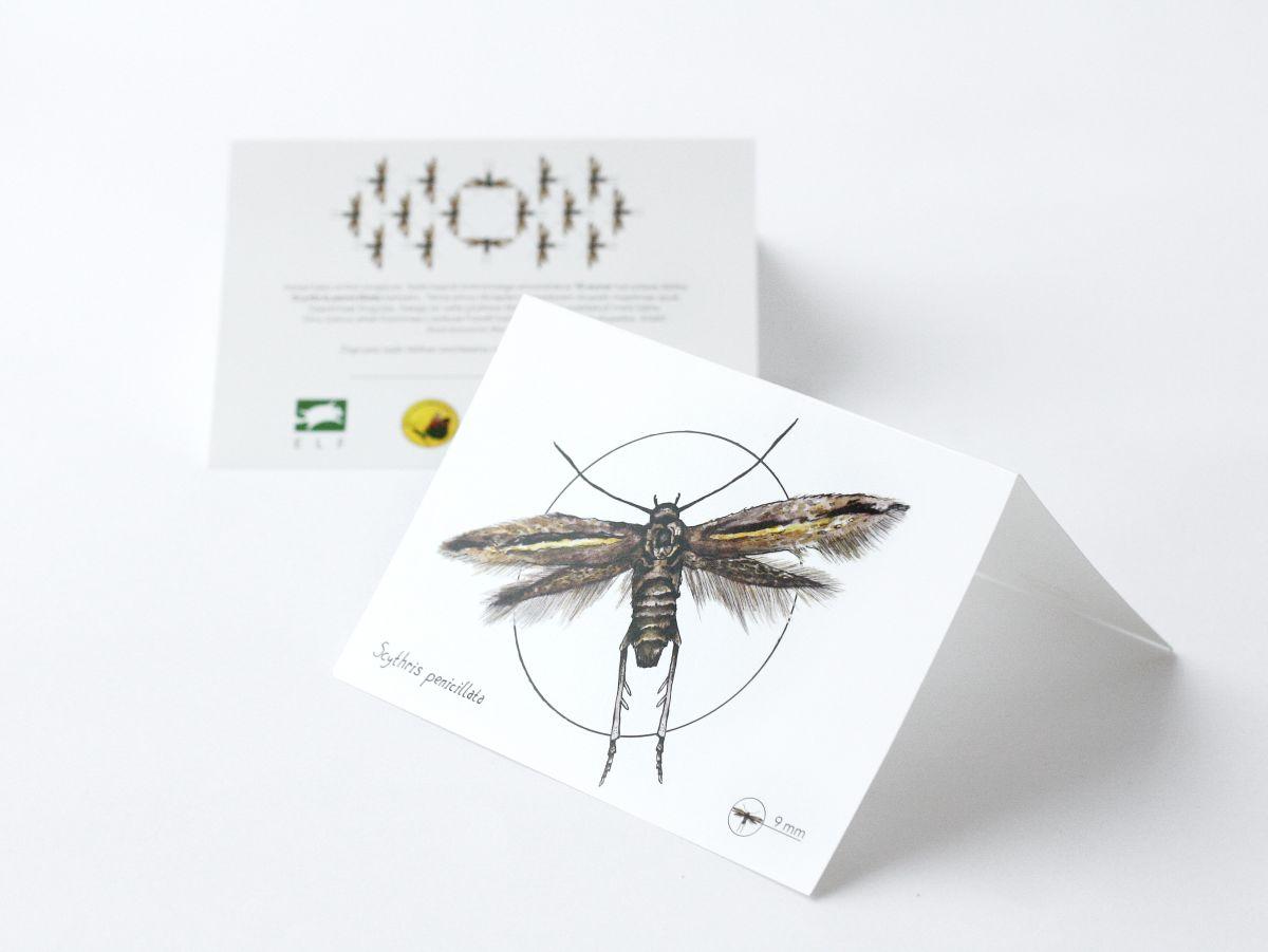 Haruldase liblika kaitset saab toetada annetuskaardiga