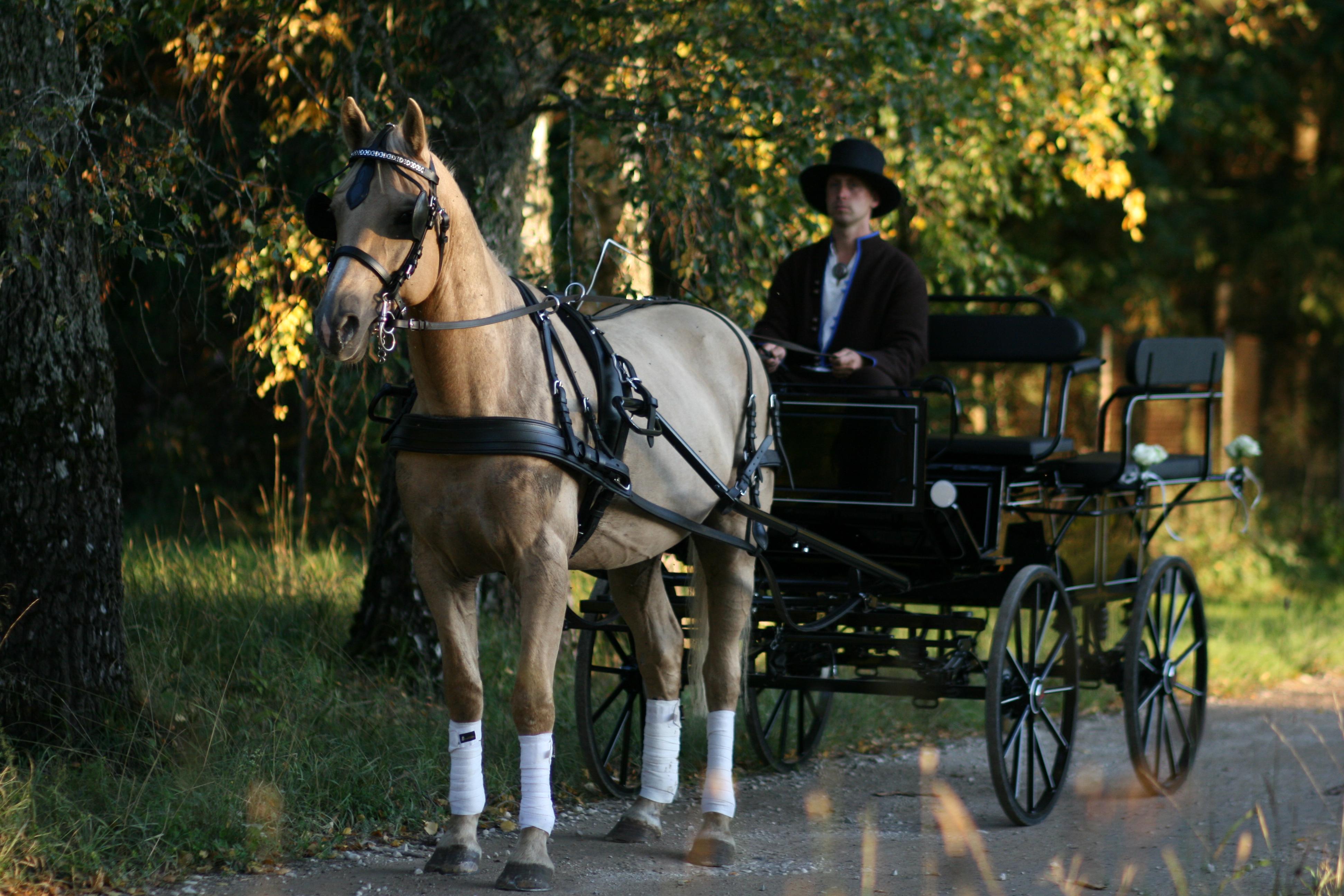 Paruto valmis pulmasõiduks...