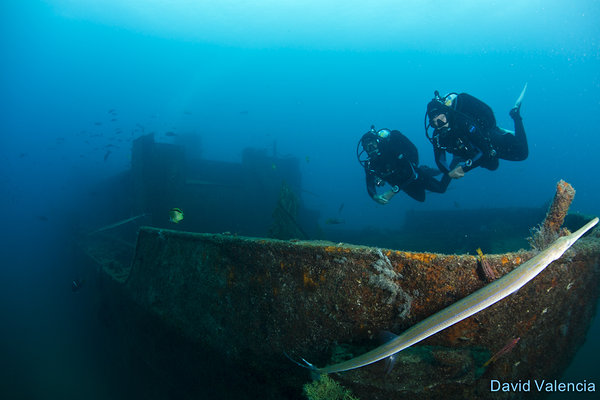 wreck of the fang ming sea of cortez