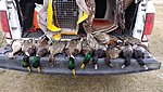 Mixed bag -- late season style