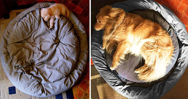 puppie then and now