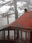 a lady and a monkey, Shimla, India