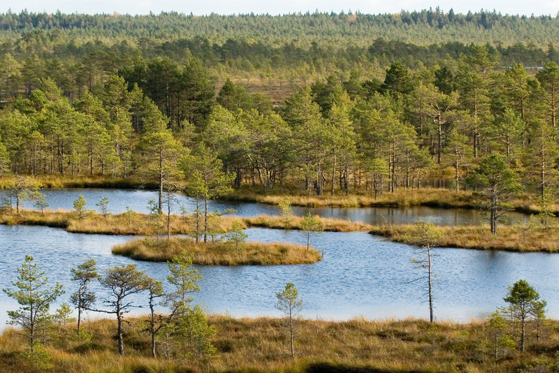 View of Kõnnu-Suursoo bog from Paukjärve observation tower