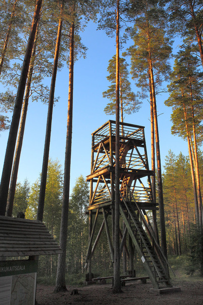 Liipsaare observation tower at Meenikunna landscape reserve