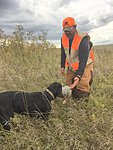 Black lab and prairie grouse
