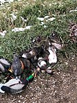 Decoys -- a few will do