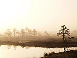 foggy morning in Kakerdaja bog, Estonia