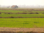 fields on Don Khong island, Laos
