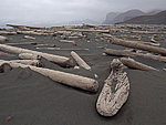 driftwood on Jan Mayen island, Norway