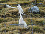 the wool that is left somewhere is used by the birds to insulate their nests