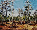 """Pines. Valgesoo Marsh"". 2020. Oil on canvas. 16'' 19''. Private collection"