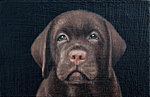 """Puppy"" Oil on panel, 11,5x7,5 cm. Painting of our dog Orwell as a puppy is my smallest portrait so far."