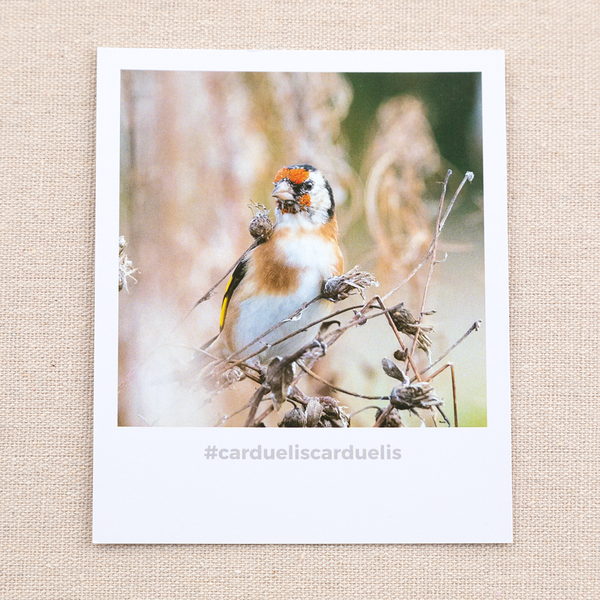 #cardueliscarduelis Polaroid Card and Notebook  by #naturelovers brand - Photo Gifts & Wall Art for Nature Lovers